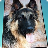 Adopt A Pet :: RAMBO VON RUDOLF - Los Angeles, CA