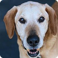 Adopt A Pet :: George - Cincinnati, OH