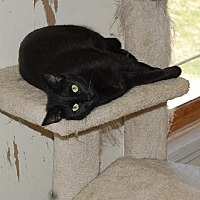 Adopt A Pet :: Hope - Alpharetta, GA