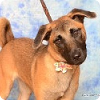 Shepherd (Unknown Type) Mix Dog for adoption in Pittsboro, North Carolina - Shea