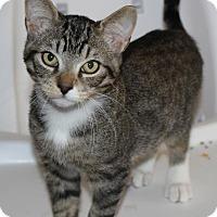Adopt A Pet :: Saturn - Toronto, ON