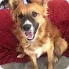 Adopt A Pet :: Bruno Adoption Pending Congrats Mason Family!