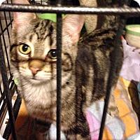 Adopt A Pet :: Benny - Lombard, IL