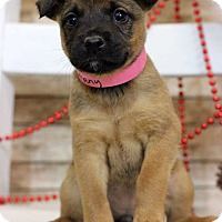 Adopt A Pet :: Bethany - Waldorf, MD
