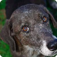 Adopt A Pet :: Cocoa - Denham Springs, LA