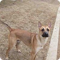 Carolina Dog Dog for adoption in Plano, Texas - MAX