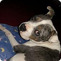 Adopt A Pet :: Zoey - Summerville, SC