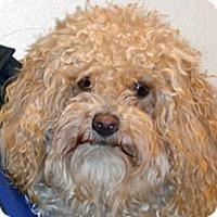 Adopt A Pet :: Shirley - Wildomar, CA