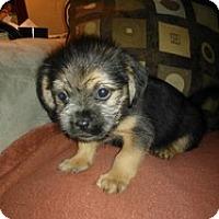 Adopt A Pet :: Toby - Marlton, NJ