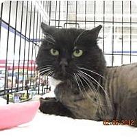 Adopt A Pet :: Valentino - Riverside, RI