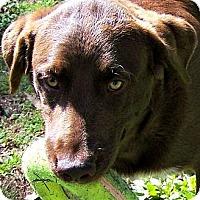 Adopt A Pet :: Miss JOURNEY - Wakefield, RI