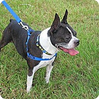 Adopt A Pet :: Milton - Kingwood, TX