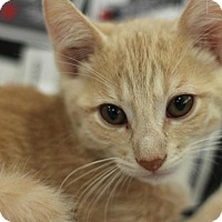 Adopt A Pet :: Garfunkle - Sacramento, CA