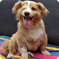 Adopt A Pet :: Wally - San Francisco, CA