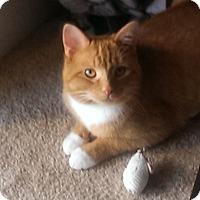 Adopt A Pet :: Dillon - Alexandria, VA