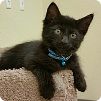 Adopt A Pet :: Dream Catcher - Phoenix, AZ