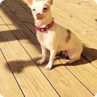 Adopt A Pet :: Mareese - Plainfield, IL