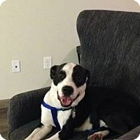 Adopt A Pet :: BENNY - Wilmington, NC