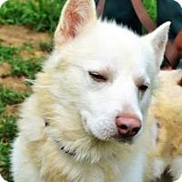 Adopt A Pet :: Kenai - Matthews, NC