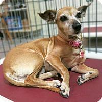 Adopt A Pet :: Katie - Irvine, CA