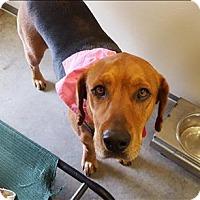 Adopt A Pet :: Sydney - Neosho, MO