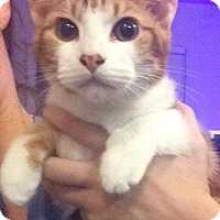 Adopt A Pet :: Zoe - Gainesville, FL