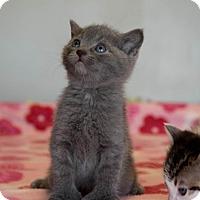 Adopt A Pet :: Wintson $125 - Seneca, SC