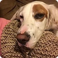 Adopt A Pet :: WINSTON - Pine Grove, PA