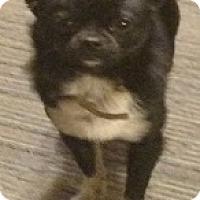 Adopt A Pet :: Nitro - Irmo, SC