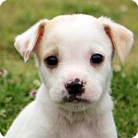 Adopt A Pet :: Cricket - Glastonbury, CT