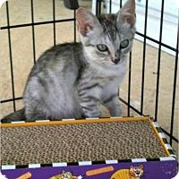 Adopt A Pet :: Lucy - Horseshoe Bay, TX