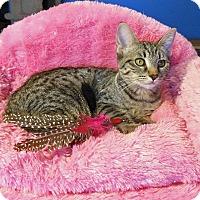 Adopt A Pet :: Ashley - Glendale, AZ