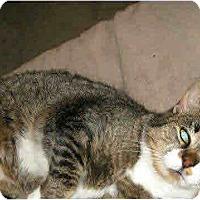 Adopt A Pet :: Sugarplum - Waterbury, CT