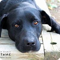 Adopt A Pet :: rambo - Edwardsville, IL