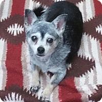 Adopt A Pet :: Lexie - Shreveport, LA