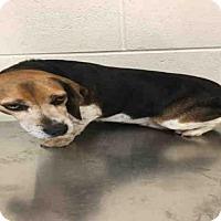Adopt A Pet :: *FLOW - Upper Marlboro, MD