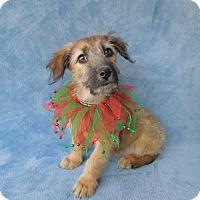 Adopt A Pet :: Daisy - Charlotte, NC