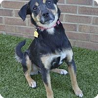 Adopt A Pet :: Webster - Germantown, TN