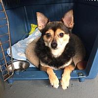 Adopt A Pet :: Fido - Liberty, MO