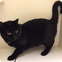 Adopt A Pet :: Libby - Merrifield, VA