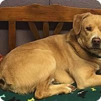 Adopt A Pet :: Jeb - Lisbon, OH