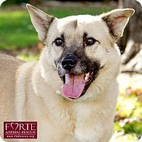 Australian Cattle Dog/Belgian Shepherd Mix Dog for adoption in Marina del Rey, California - Cheetos