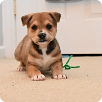 Adopt A Pet :: Laverne - Hagerstown, MD