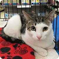 Adopt A Pet :: .Raven - Ellicott City, MD