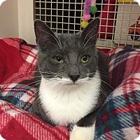 Adopt A Pet :: Jenkins - Islip, NY
