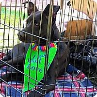 Adopt A Pet :: Tess - Midway, KY