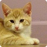 Adopt A Pet :: Cheeka - Monroe, GA