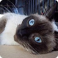 Adopt A Pet :: Sabrina - Lantana, FL