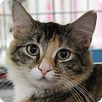 Adopt A Pet :: Cinderella - Santa Monica, CA