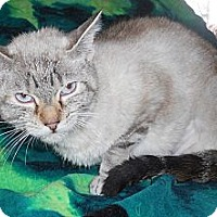 Adopt A Pet :: Blue eye Madonna $29 - batlett, IL